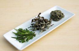 این گیاه دارویی سرطان را نابود میکند-سلامت
