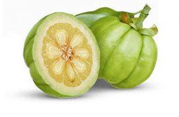با گیاه گارسینیا کامبوجیا بیشتر آشنا شوید
