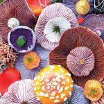 قارچ های عجیب