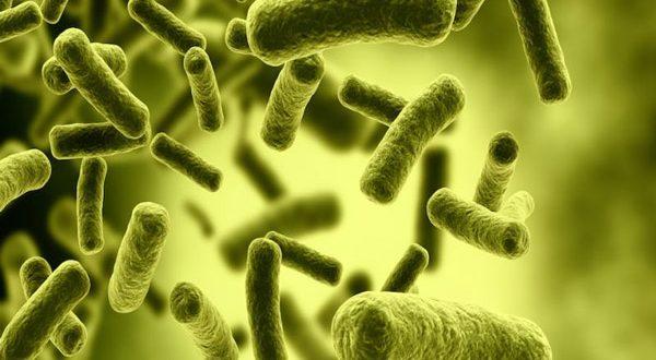 ماست پروبیوتیک چیست و خواص آن