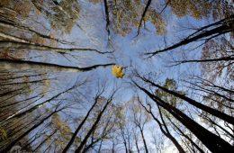 تصاویر/ حیات وحش پاییزی در سراسر جهان