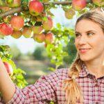میوه های سالم در پاییز