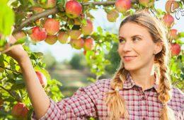 میوههای سالمی که باید در فصل پاییز بخورید