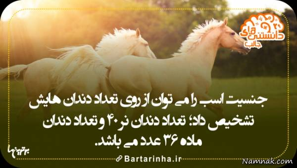 دانستنیها درباره اسب