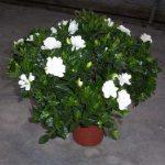 آشنایی با 12 نوع گیاهان آرام بخش