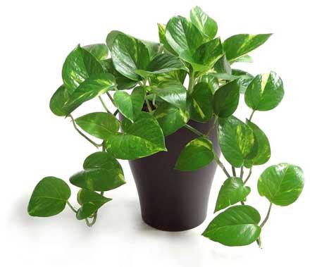 گیاهانی برای کاهش استرس,معرفی گیاهان آرام بخش