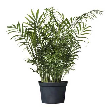 شناخت گیاهان آرام بخش,گیاهانی برای درمان استرس