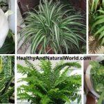 بهترین گیاهان تصفیه کننده هوا