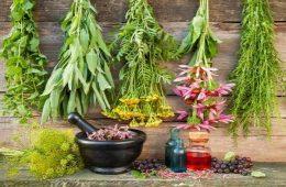 نسخه گیاهی برای  سمزدایی کبد و سیستم ایمنی بدن