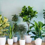 معرفی ۱۰ گیاه تصفیه کننده هوا ومخصوص آپارتمان