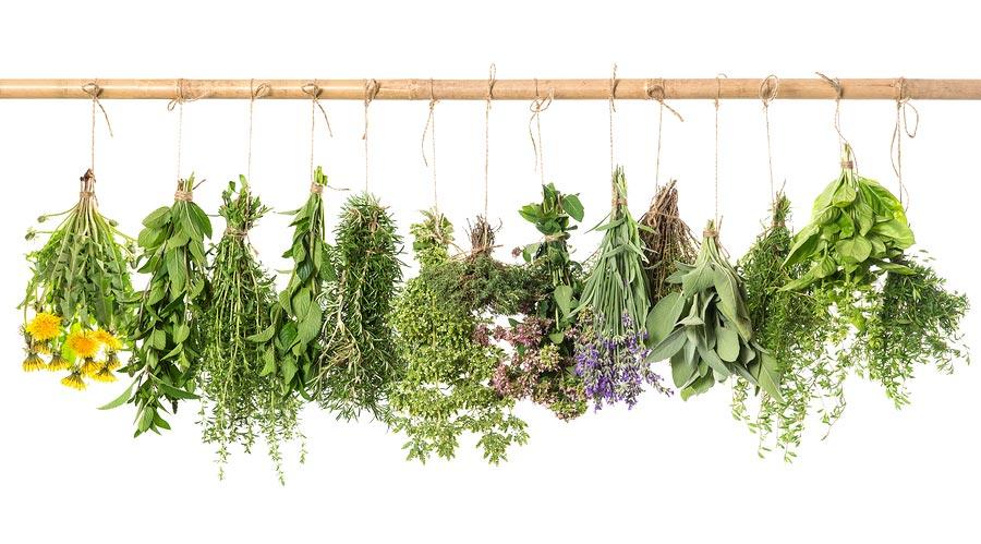 بهترین گیاهان دارویی برای لاغری و کاهش وزن