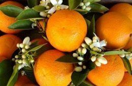 """با خواص """"نارنج"""" آشنا شوید-سلامت"""