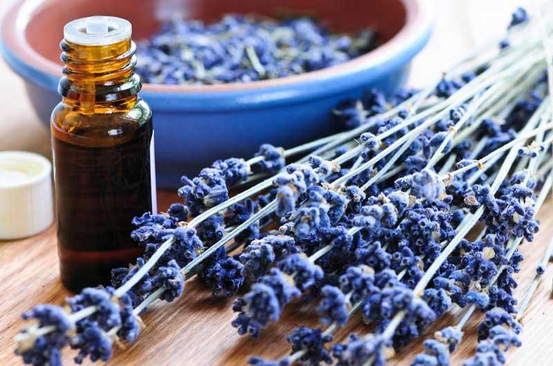lavender-essential-oil اسطوخودوس