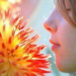استشمام بوی برخی از گیاهان باعث خوش اخلاقی تان می شوند