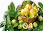 کاهش وزن با میوه گارسینیا کامبوجیا