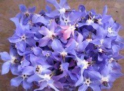خواص فوق العاده گل گاوزبان را میدانید؟