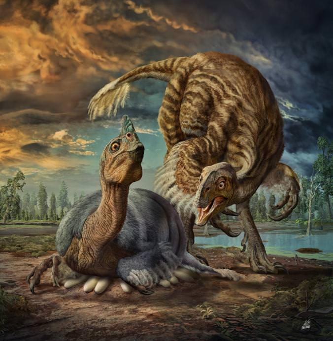 Oviraptorosaur Illustration