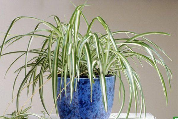 8 گیاه مفید برایاتاق خواب