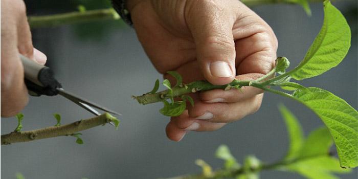 انواع روش های قلمه زدن گیاهان