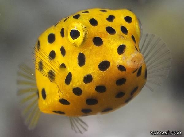 تصویر ماهی