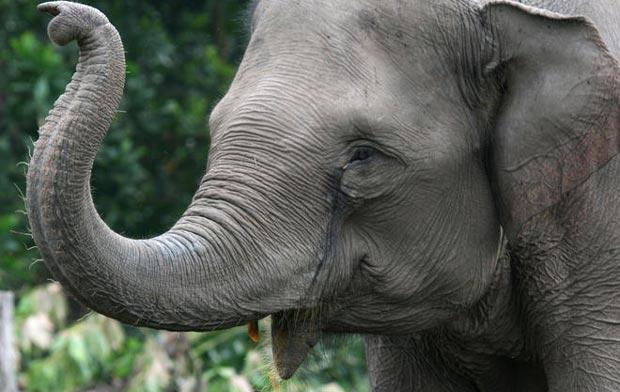 تعبیرخواب فیل در خواب چیست؟