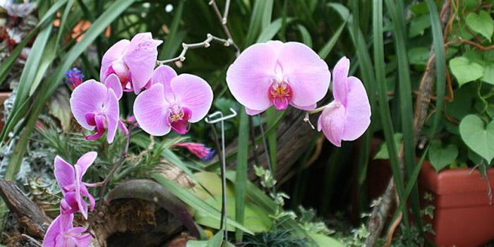 نحوه کاشت گل ارکیده در گلدان