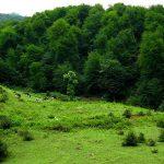 جاذبه گردشگری جنگل ناهارخوران گرگان