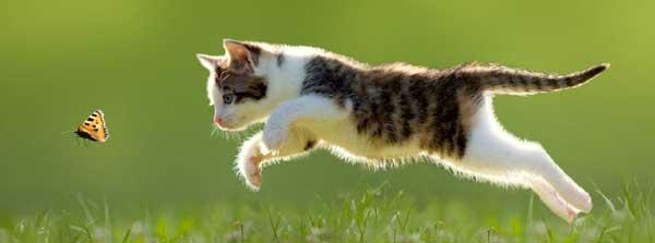 تعبیر خواب گاز گرفتن گربه چیست؟