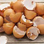 خواص پوست تخم مرغ و کاربردهای آن