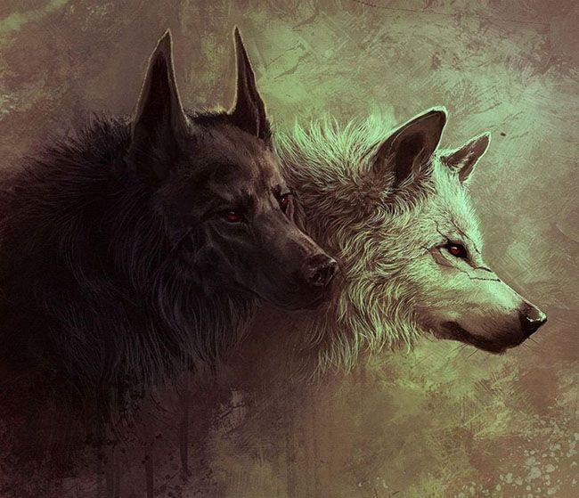 تعبیر خواب گرگ سیاه