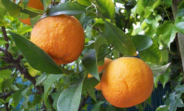 تعبیر خواب نارنج در خواب چیست؟