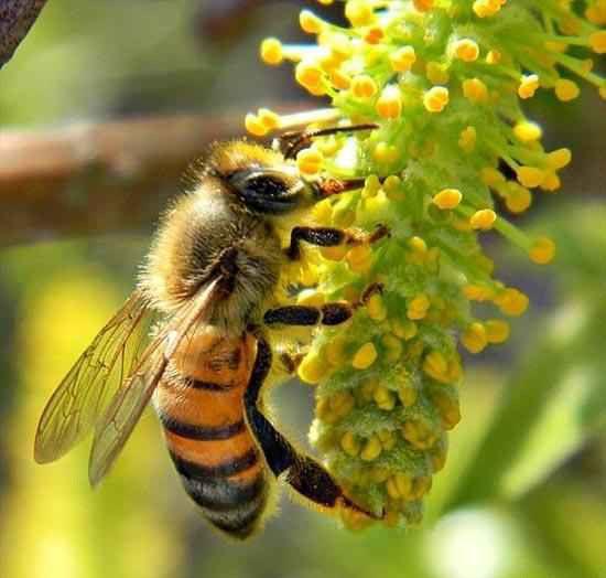 تعبیر خواب دیدن زنبور در خواب چیست