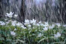 تعبیر خواب باران/دیدن باران در خواب چه تعبیری دارد