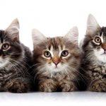 دانستنی های جالب درباره گربه ها