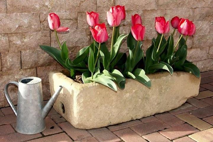 آموزش کاشت پیاز گل لاله