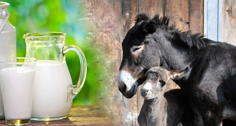 شیر الاغ