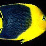 تعبیر خواب ماهی/ دیدن ماهی در خواب نشانه چیست