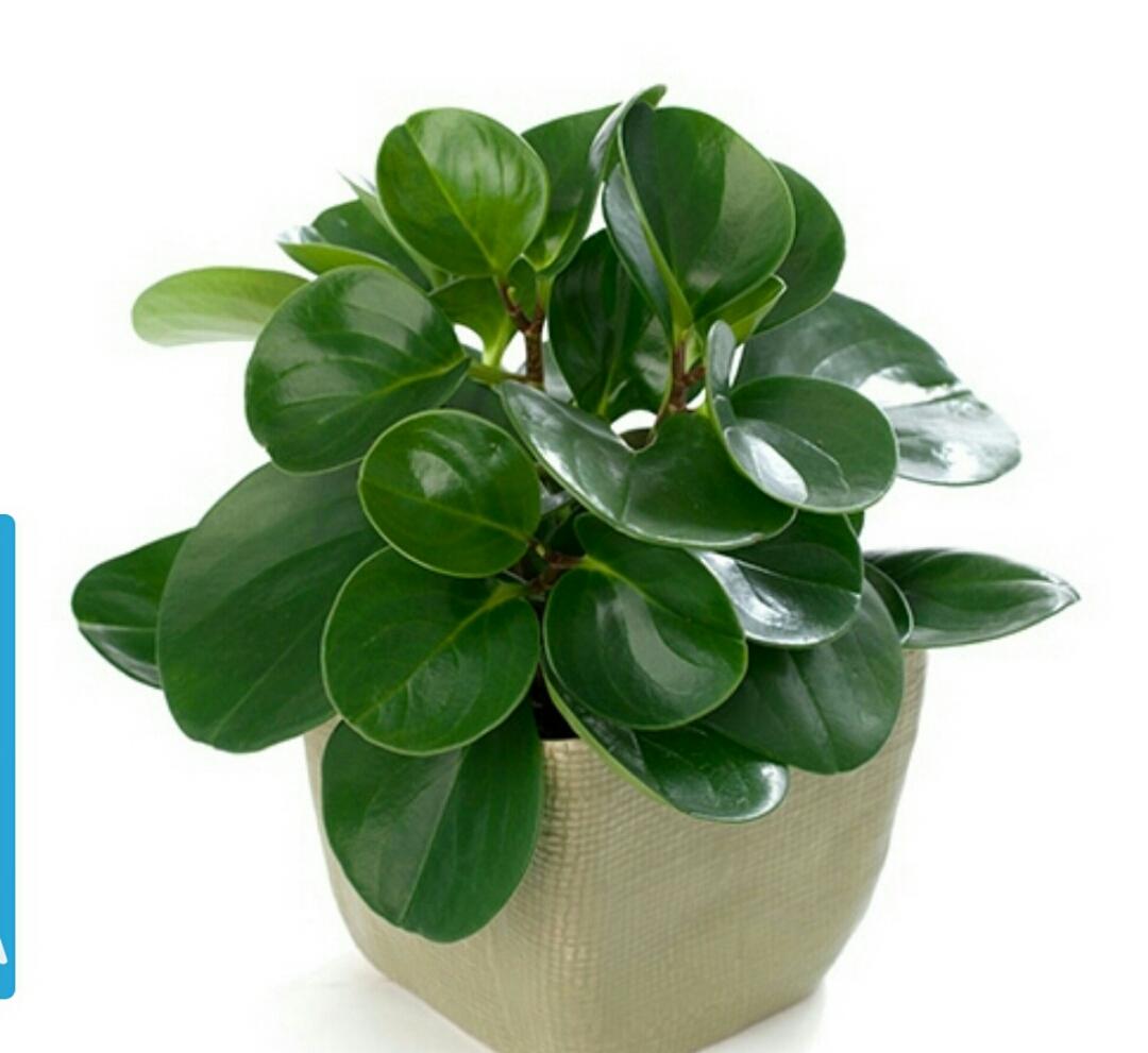 گیاهان انزژی زا و مناسب برای خانه