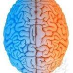 نیمکره راست مغزتان فعال تر است یا نیمکره چپ