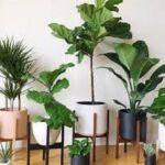 از علت های نگهداری گل و گیاه