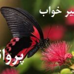 تعبیر خواب پروانه