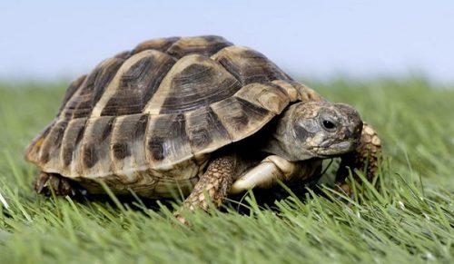 تعبیر خواب لاکپشت