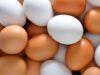 تخم مرغ کاهش وزن