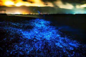 خلیج شگفت انگیز تویوما