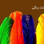 تجربه بینظیر خدمات دانشجویی ارزان در تهران