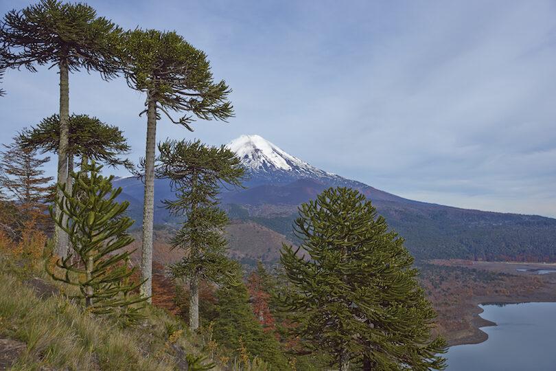 کشور شیلی