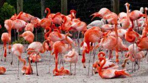 بزرگترین باغ وحش در جهان