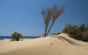 ساحل پاتارا( Patara Beach)